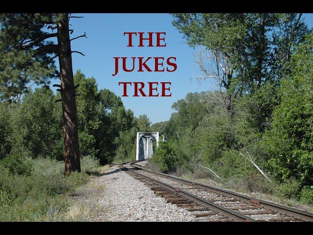 Jukes Tree
