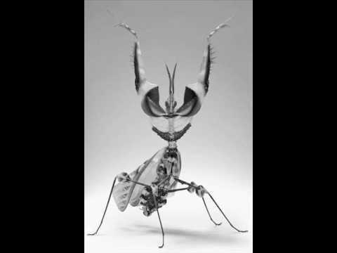 Graeme Revell -  Nocturne (on an oriental Theme)