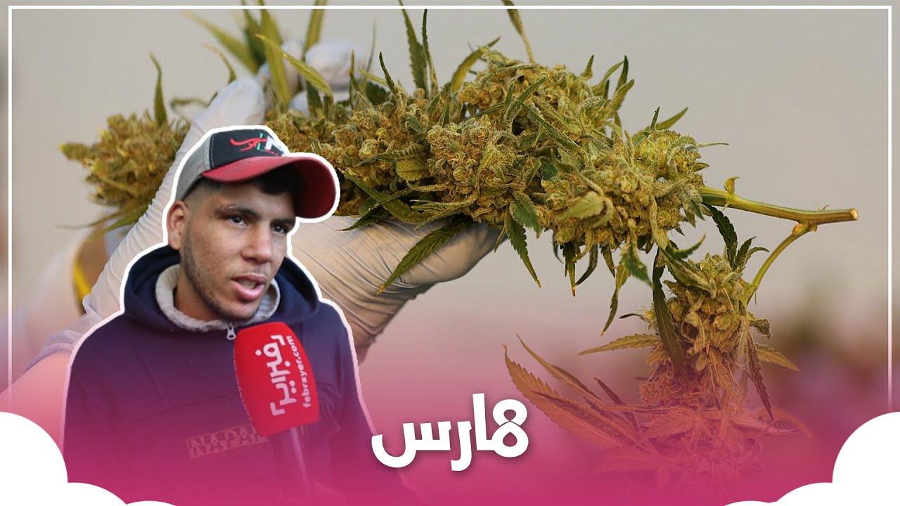لن تصدقوا ما قاله مغاربة بخصوص تقنين الحكومة لزراعة ال_كيف  - نشر قبل 7 ساعة