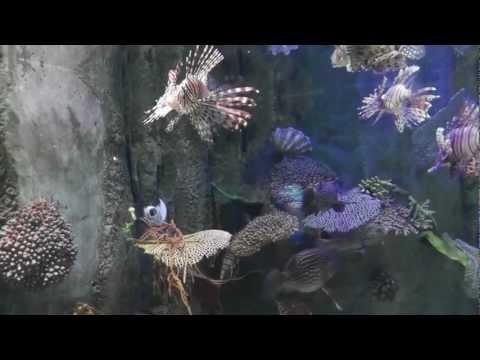 Aquarium Mall of Emirates Dubai
