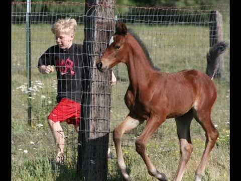 Marvelous Morgan Horses