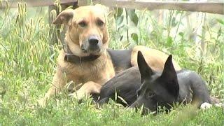 У Сумах бездомних собак стерилізуватимуть