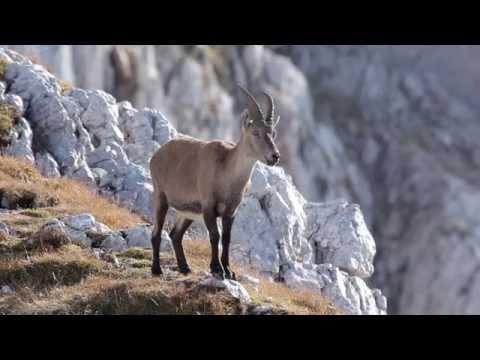 Slovenian Alps - Experience Nature / Slovenske Alpe - Dozivite Naravo Gorenjske