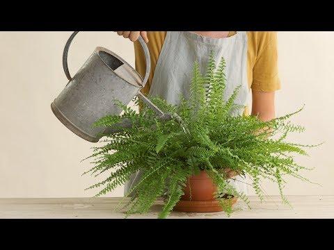 Vídeos de plantas en El Mueble