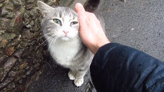 Two cats with Stray dog