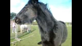 Vanny and midnight xx