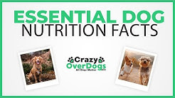 Essential Dog Nutrition Facts - You SHOULD Know
