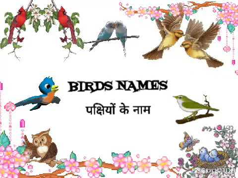10 birds names in hindi The bird list given below are are seen in the indian sub-continent which are dimorphic, some with crests and others without,hence the name.
