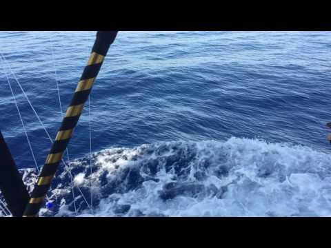 Jim Cox Blue Marlin on Skin Deep Part 1