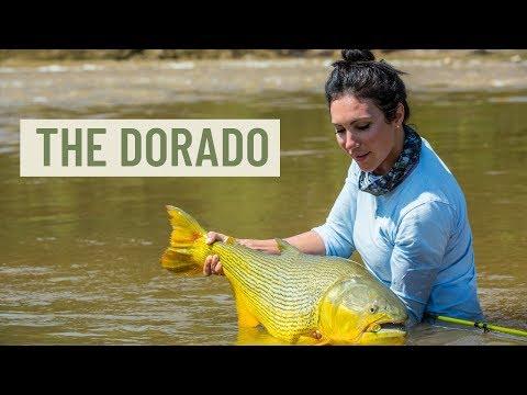 The Dorado