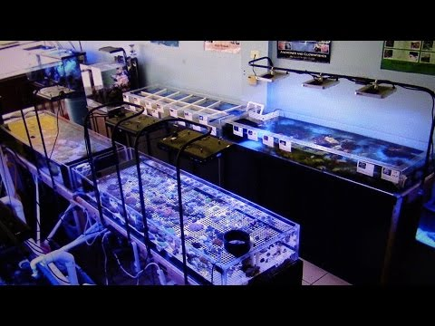 LFS SEA CREATURES NEW EQUIPMENT AND FISH NASO TANG SALTWATER AQUARIUM CORAL REEF TANK UPDATE
