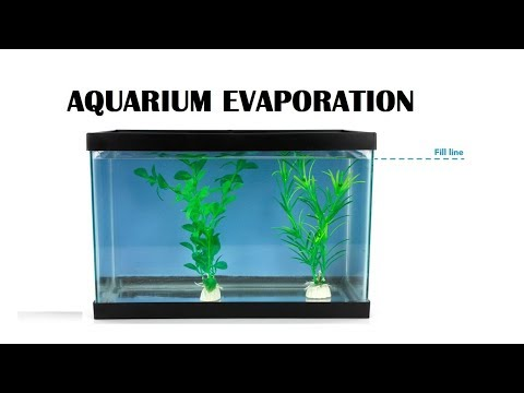 Why Is My Fish Tank Water Evaporating So Fast?
