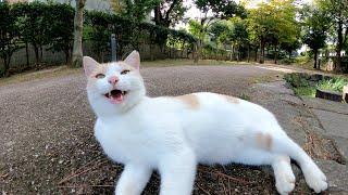 ミルクティー猫をナデナデしたら可愛らしいスマイルを見せてくれた