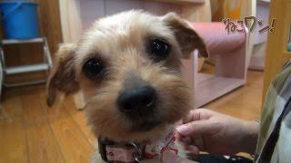 愛媛県動物愛護センターで出会ったボランティア「宇都宮典子さん」に犬...