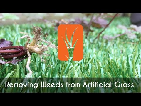 Removing Weeds from Artificial Grass - Bella Turf
