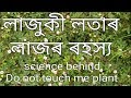 Science Behind Touch Me Not Plant In Assamese Language