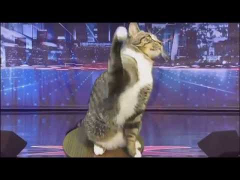 Talking Cat Surprises Judges -America's Got Talent