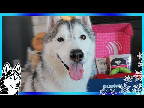 HUSKY ONLY WANTS TREATS | PupJoy Unboxing