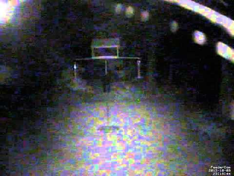 Feedercam Capture (2013-10-09)