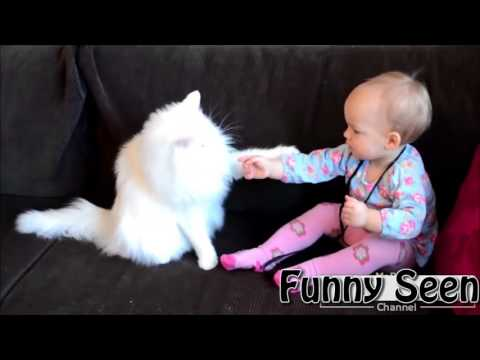 Very funny cats baby videos, cats annoying babies,kitten hissing, cats and kittens meowing