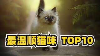 世界最温顺的猫咪种类TOP10第一名你猜到了吗
