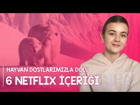Hayvan Dostlarımızla Dolu 6 Netflix İçeriği