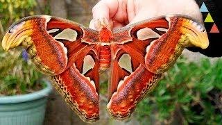 Gambar cover Os 10 maiores insetos do mundo