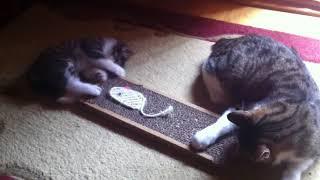 Мама кошка учит точить когти котенка, супермило