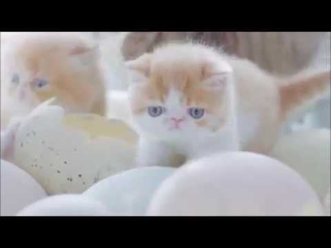 Very Cutest Baby Cats Coming Out Of From Eggs: Kittens – ♥ Cat Lovers