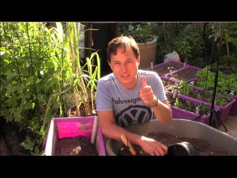 Top Tips on How to Grow an Organic Vegetable Garden for Free