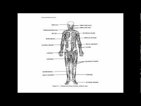 Anatomy and Physiology Study Guide - Quizzes - YouTube