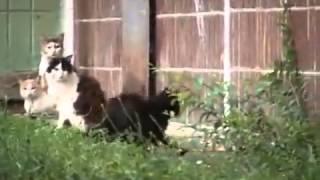 кот испугался крысу