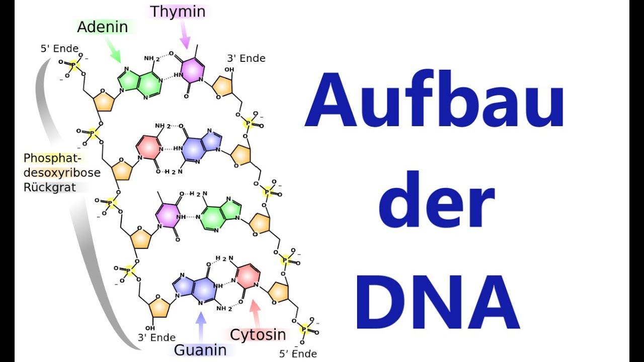 Struktur Und Funktion Biologie