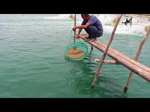 Marine Shrimp Farm Lampung