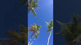 Пунта Кана. Пляж отеля Барсело Баваро Де люкс.