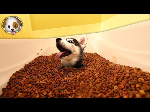 SURPRISING MY PUPPY WITH A BATHTUB FULL OF DOG FOOD! | David Vlas