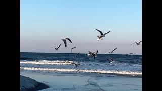 Atlantic Ocean - Jacksonville, FL