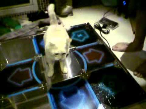 超QQ貓咪在玩跳舞機DDR~之垂死掙扎的逗貓棒!
