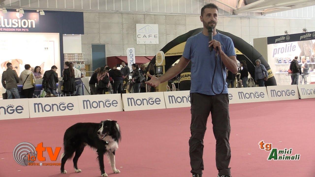 Fra le lingue moderne anche il linguaggio del cane