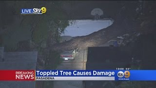 Massive Tree Crushes Car And Garage