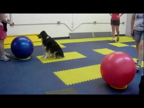 treibball-class-at-superior-dog-training