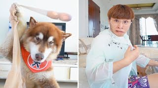 The dogs are cute and funny #28  Funny and Cute Pets Compilation