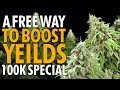 Increase Cannabis Plant Yields & Quality For Free