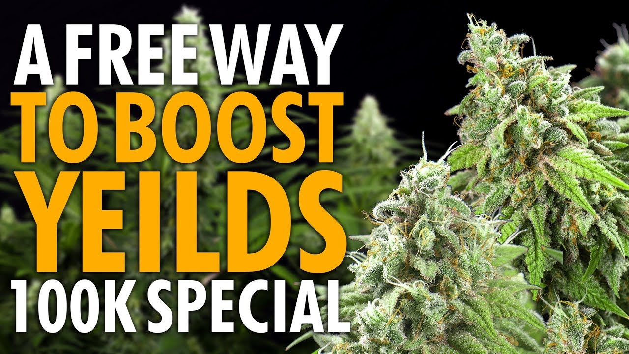 Download Increase Cannabis Plant Yields & Quality For Free