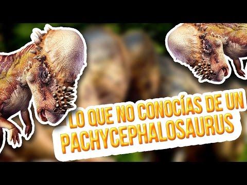 Lo que no conocías de un Pachycephalosaurus