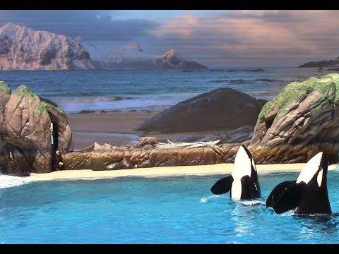 First Public Orca Encounter Rehearsal at SeaWorld San Diego 5-26-17
