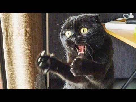 Funniest  Cats and  Dogs -  Funniest Animals Life 2019
