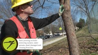 How to Prune: Basic Pruning