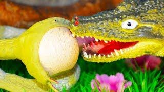 КРОКОДИЛ, ЗМЕЯ и ДЕРЕВЯННЫЕ ЯЙЦА! Про животных Театр игрушек для детей