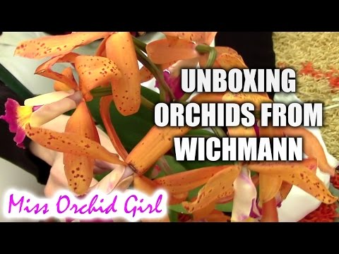 Unboxing orchids from Wichmann online store
